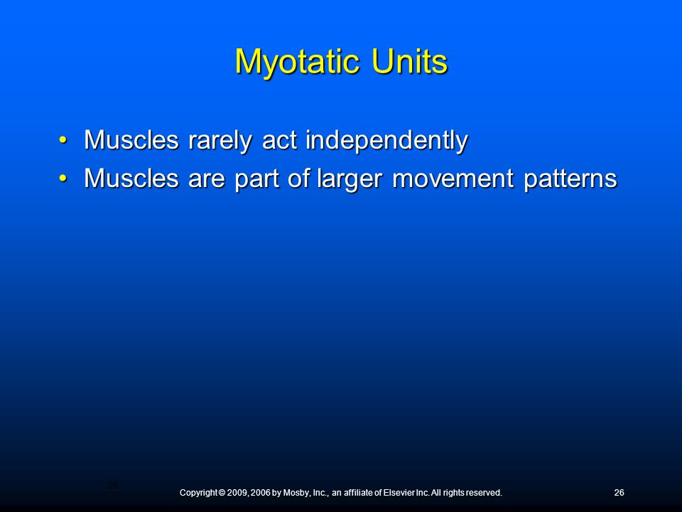 Myotatic Units Muscles rarely act independently