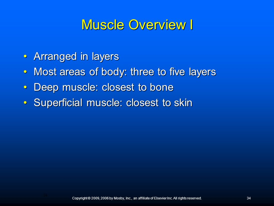 Muscle Overview I Arranged in layers