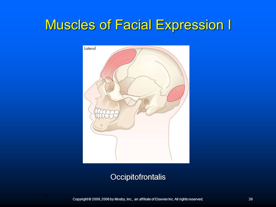 Muscles of Facial Expression I