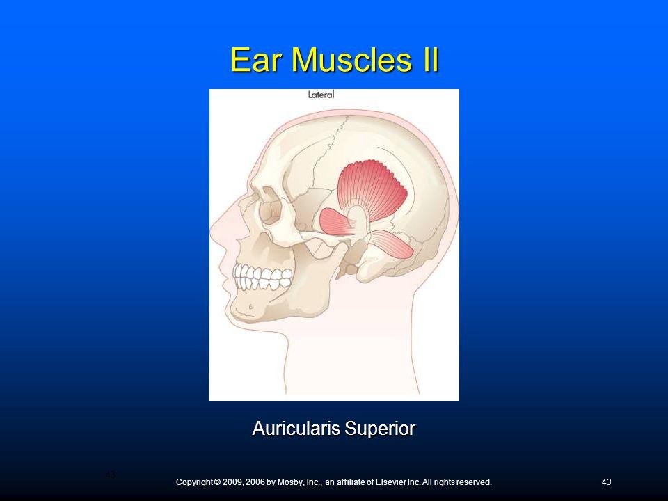 Ear Muscles II Auricularis Superior
