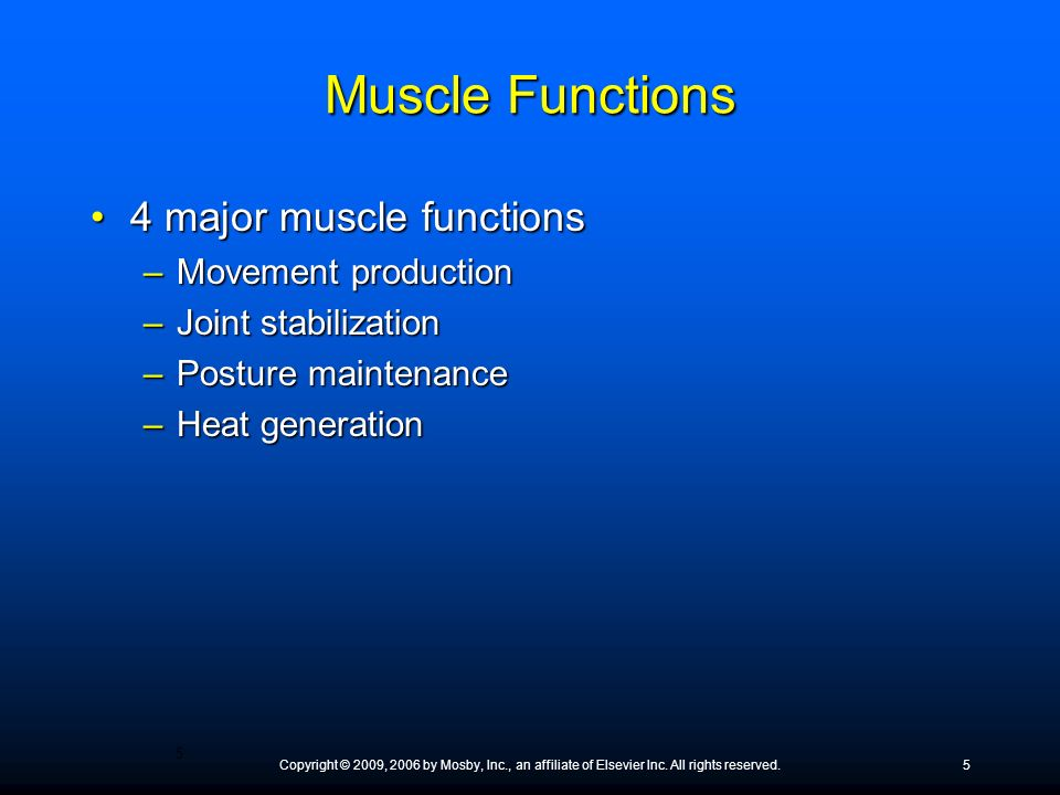 Muscle Functions 4 major muscle functions Movement production