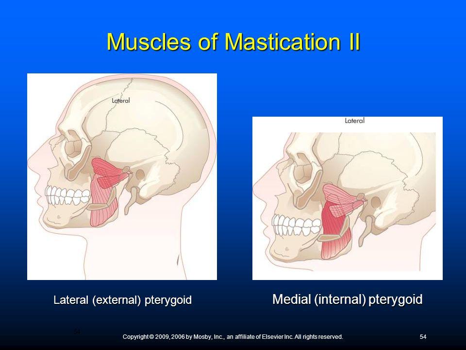 Muscles of Mastication II