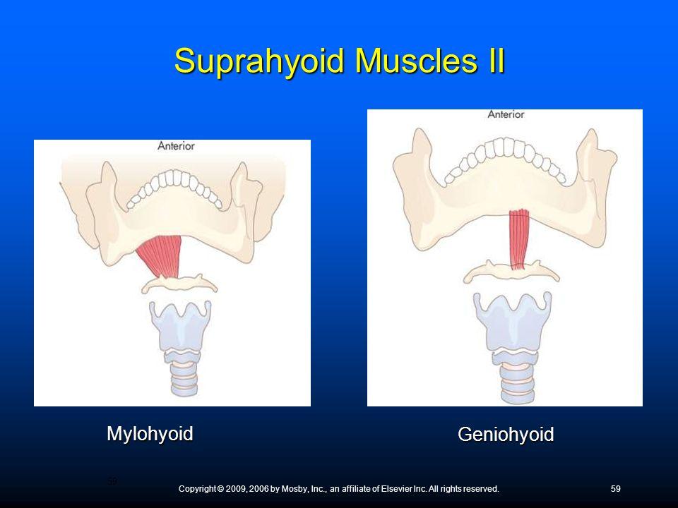 Suprahyoid Muscles II Mylohyoid Geniohyoid