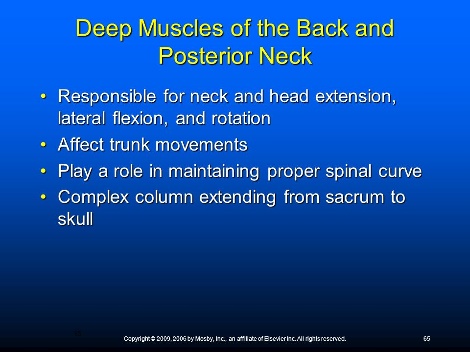 Deep Muscles of the Back and Posterior Neck