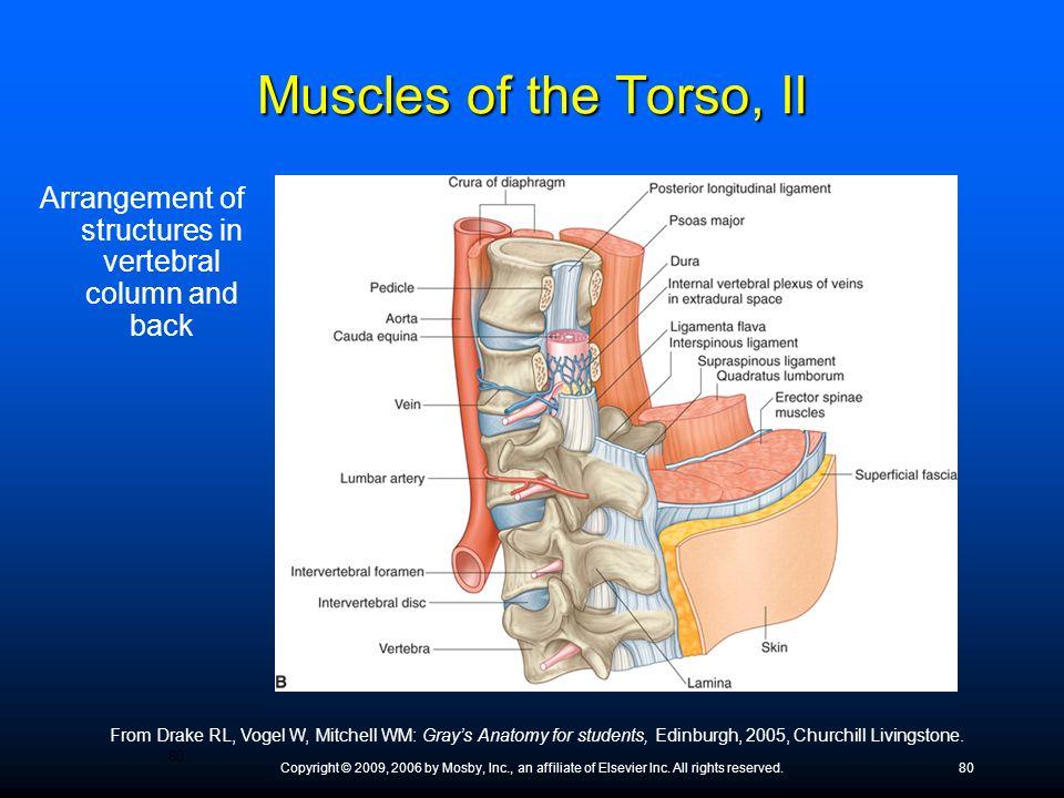 Arrangement of structures in vertebral column and back