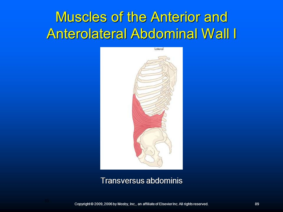 Muscles of the Anterior and Anterolateral Abdominal Wall I