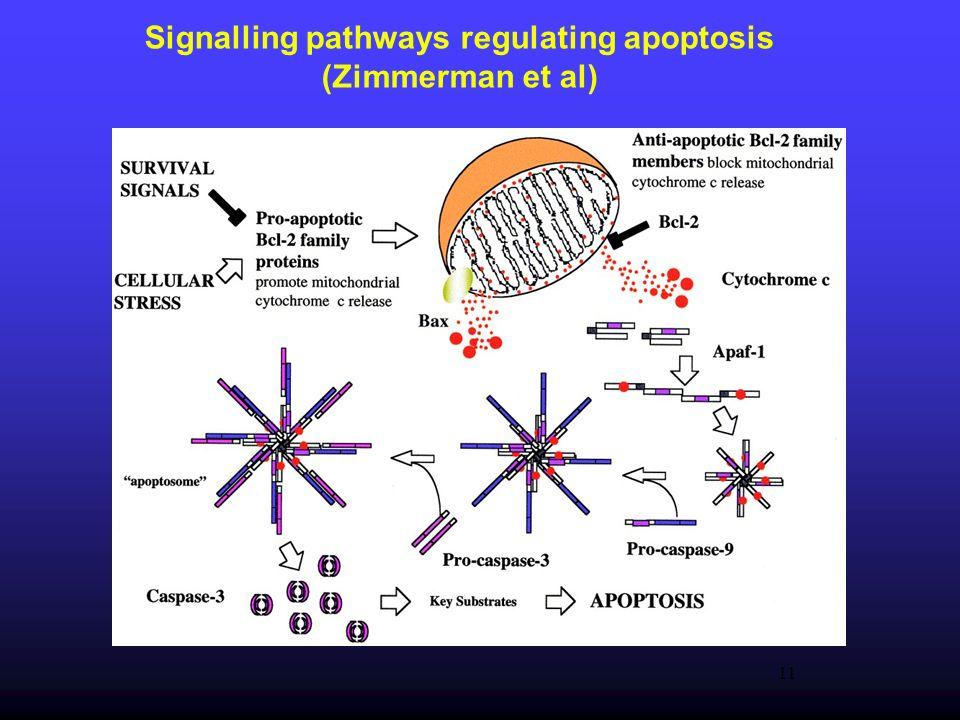 Signalling pathways regulating apoptosis