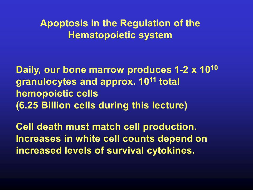 Apoptosis in the Regulation of the Hematopoietic system