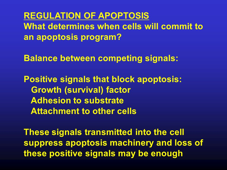 REGULATION OF APOPTOSIS