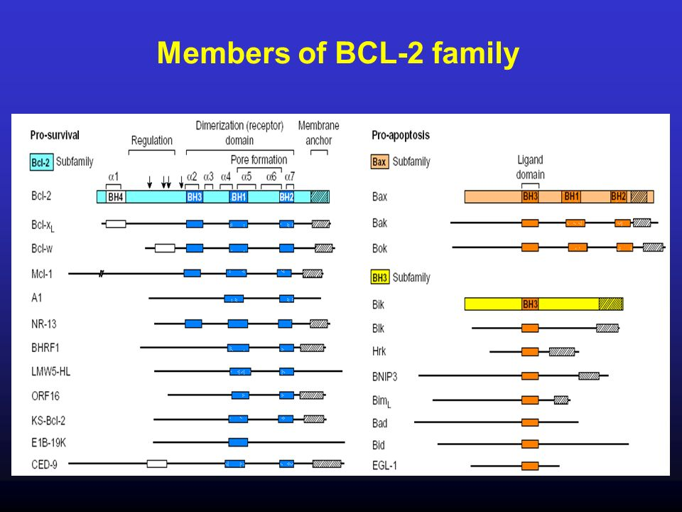 Members of BCL-2 family