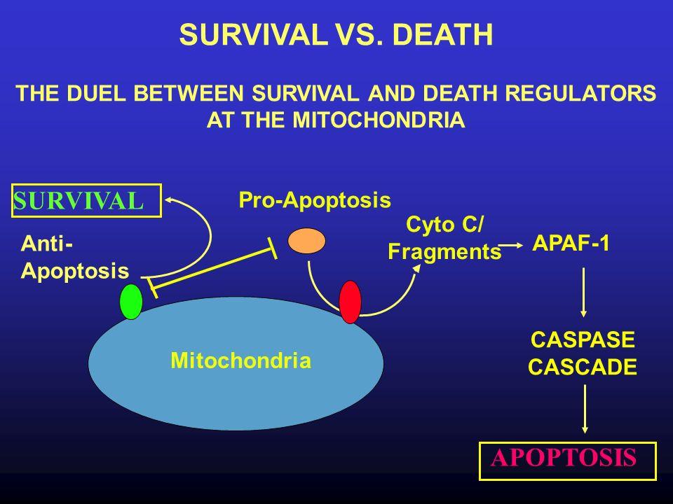 THE DUEL BETWEEN SURVIVAL AND DEATH REGULATORS