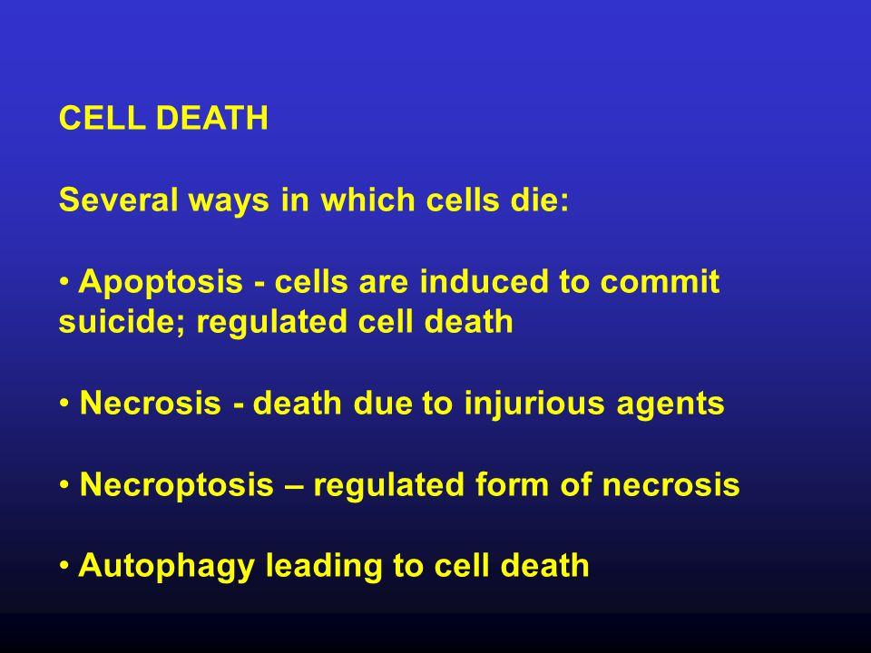 Several ways in which cells die: