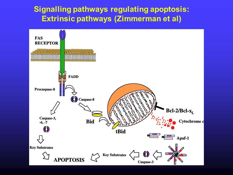 Signalling pathways regulating apoptosis: