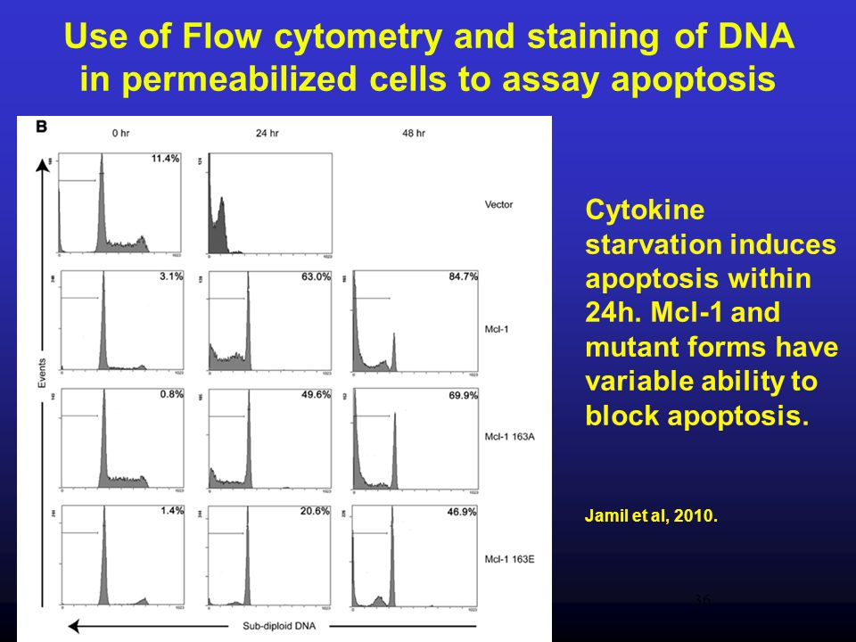 Use of Flow cytometry and staining of DNA in permeabilized cells to assay apoptosis