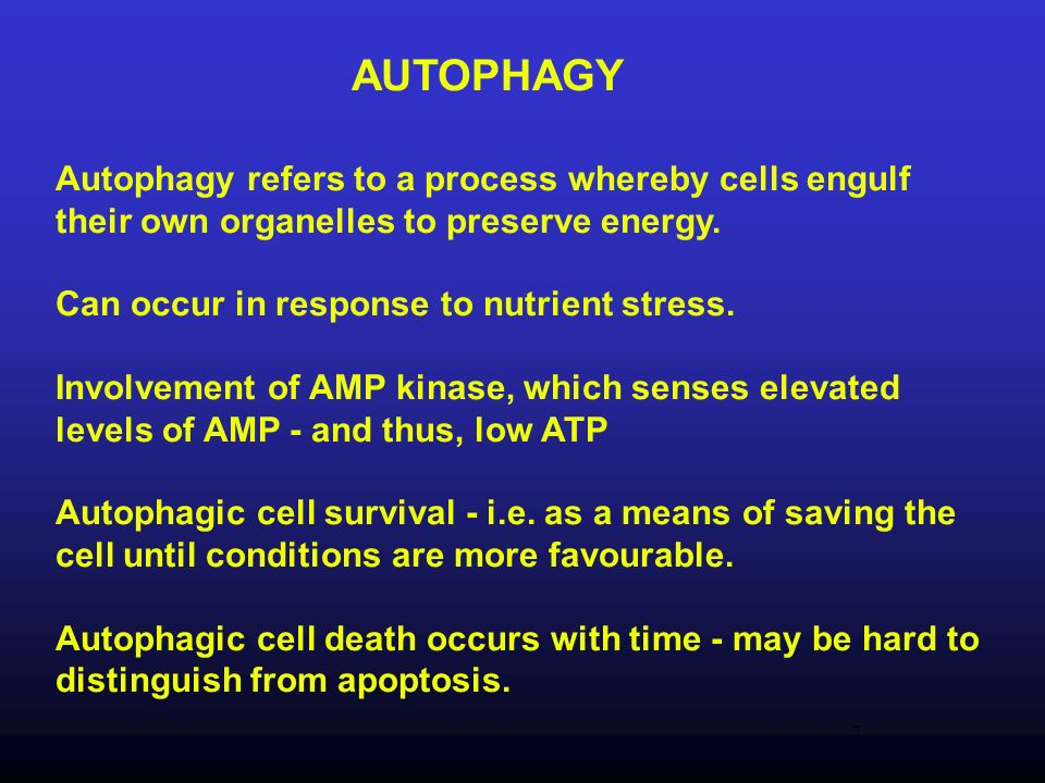 AUTOPHAGY Autophagy refers to a process whereby cells engulf their own organelles to preserve energy.