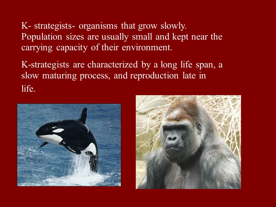 K- strategists- organisms that grow slowly