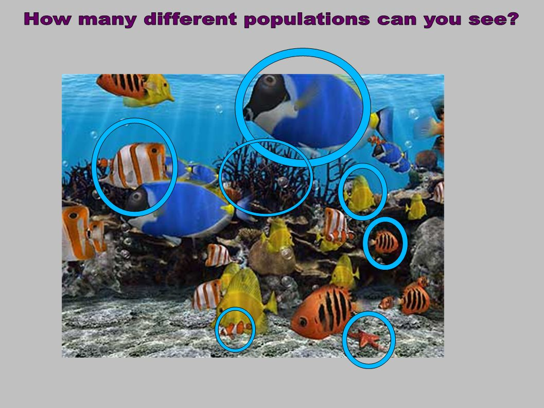 How many different populations can you see