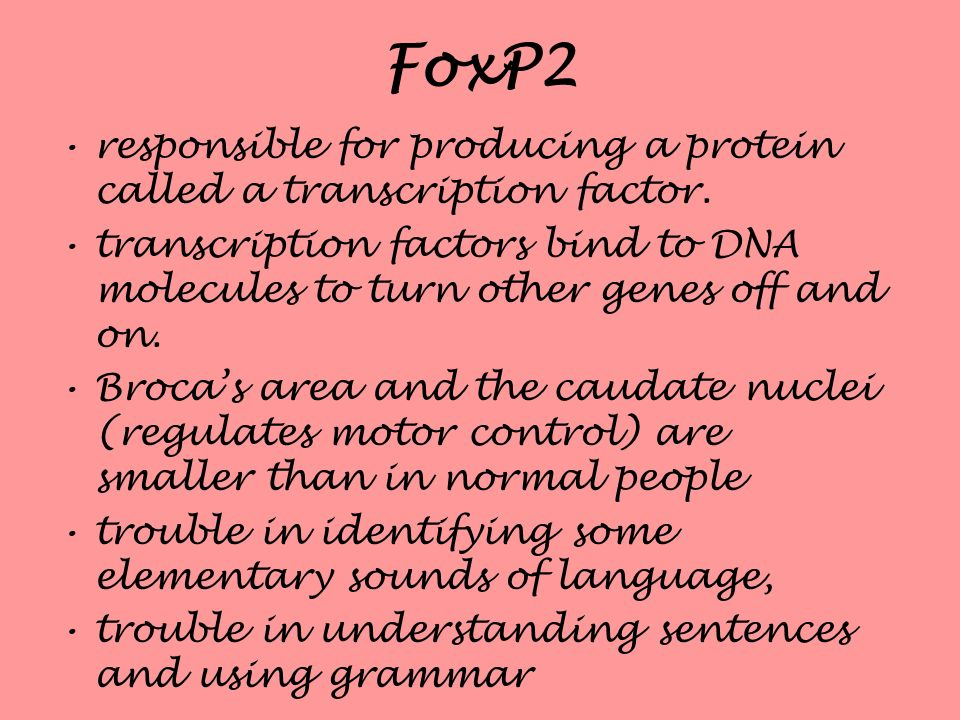 FoxP2 responsible for producing a protein called a transcription factor. transcription factors bind to DNA molecules to turn other genes off and on.