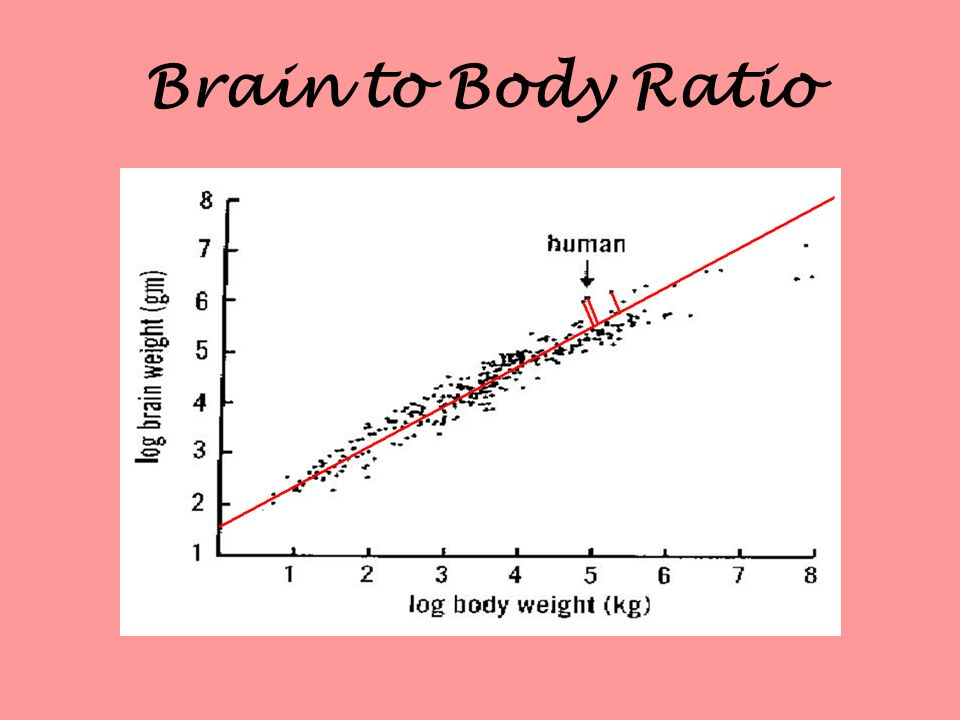 Brain to Body Ratio