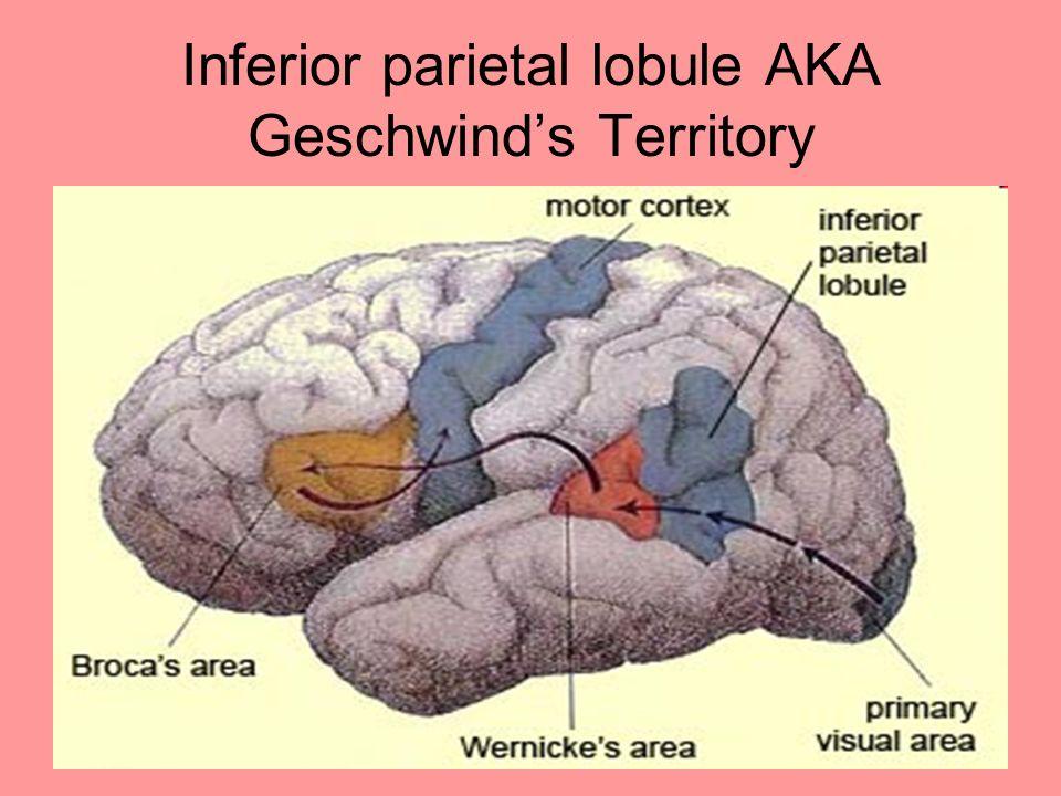 Inferior parietal lobule AKA Geschwind's Territory