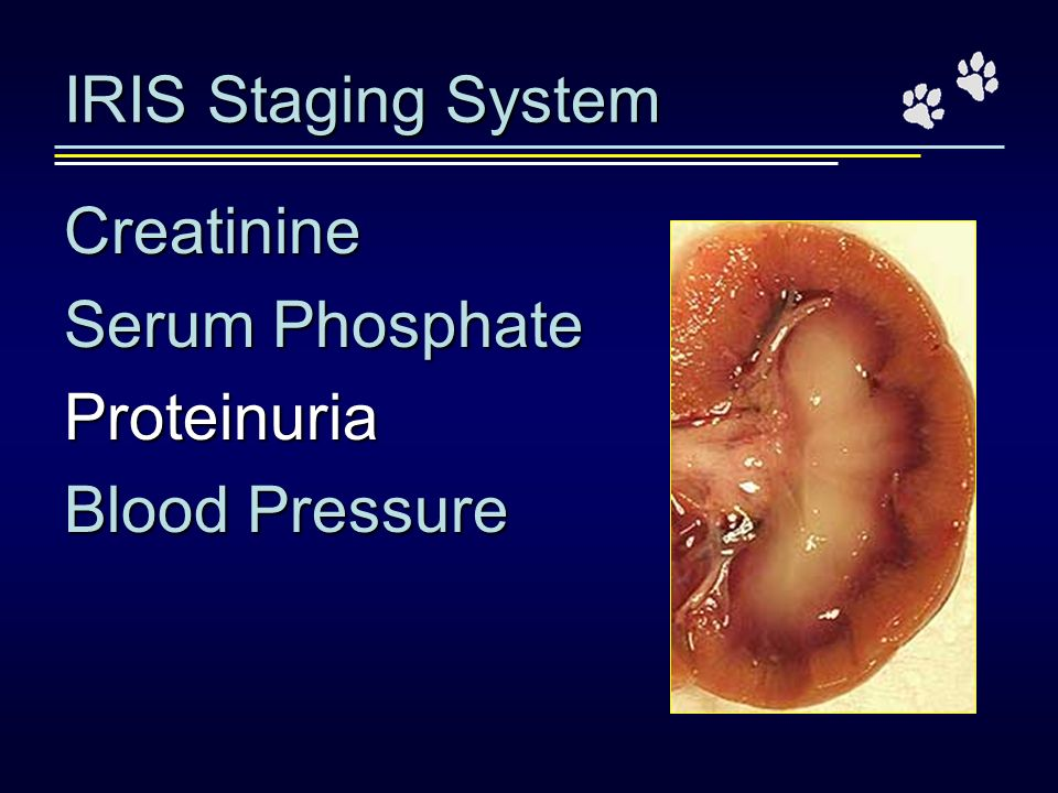 IRIS Staging System Creatinine Serum Phosphate Proteinuria Blood Pressure