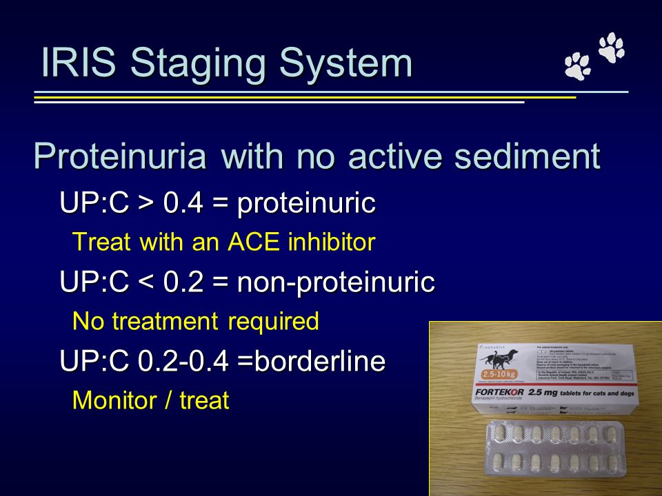 IRIS Staging System Proteinuria with no active sediment