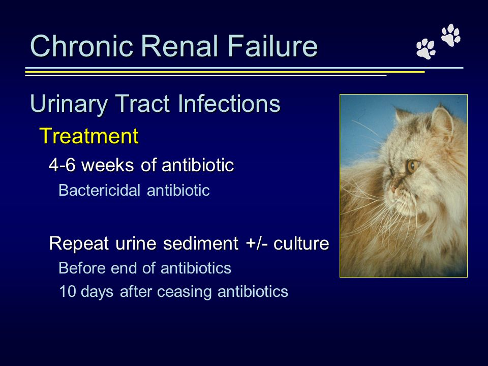 Chronic Renal Failure Urinary Tract Infections Treatment