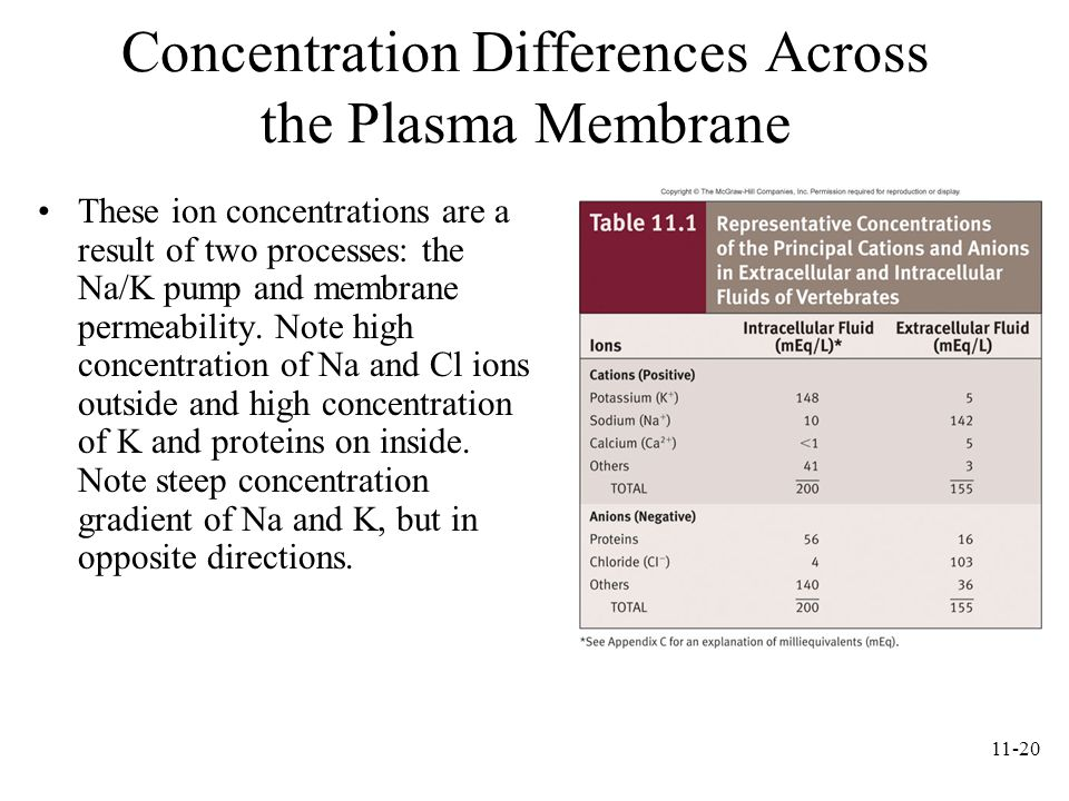 Concentration Differences Across the Plasma Membrane