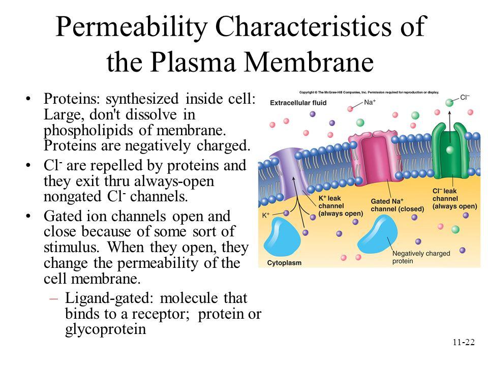 Permeability Characteristics of the Plasma Membrane