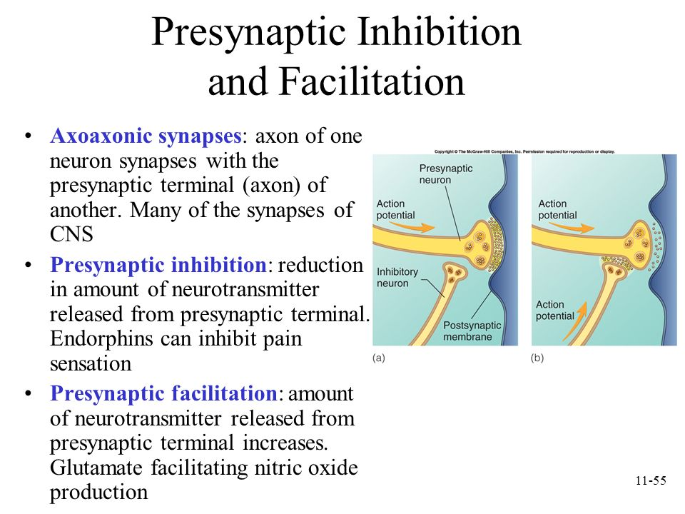 Presynaptic Inhibition and Facilitation