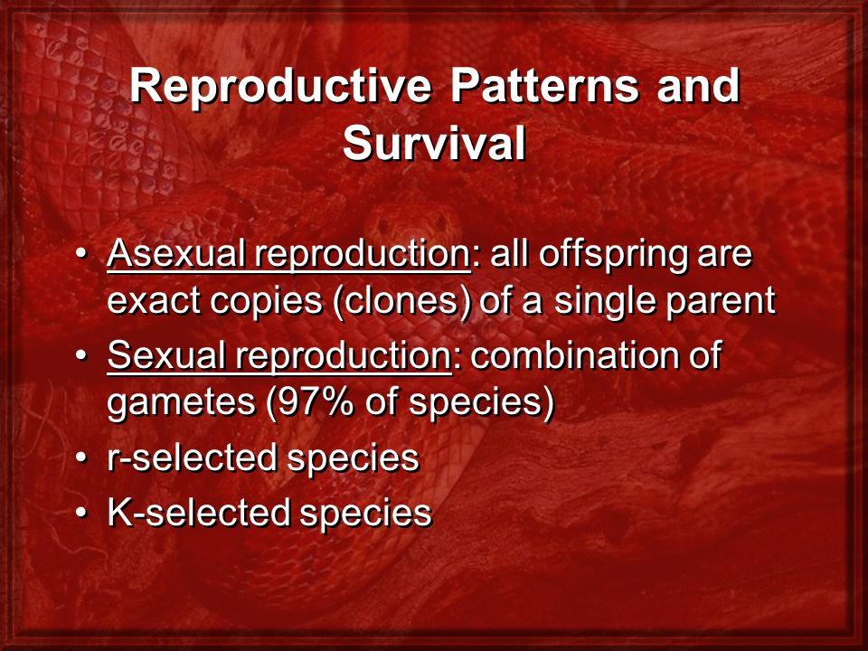 Reproductive Patterns and Survival