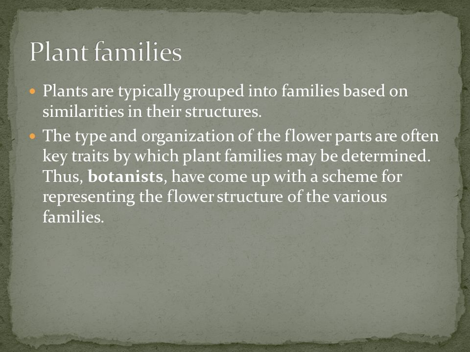 Plant families Plants are typically grouped into families based on similarities in their structures.