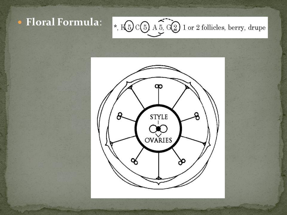 Floral Formula: