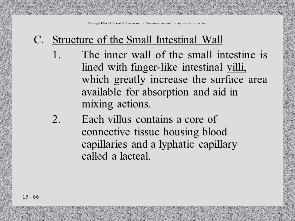 C. Structure of the Small Intestinal Wall