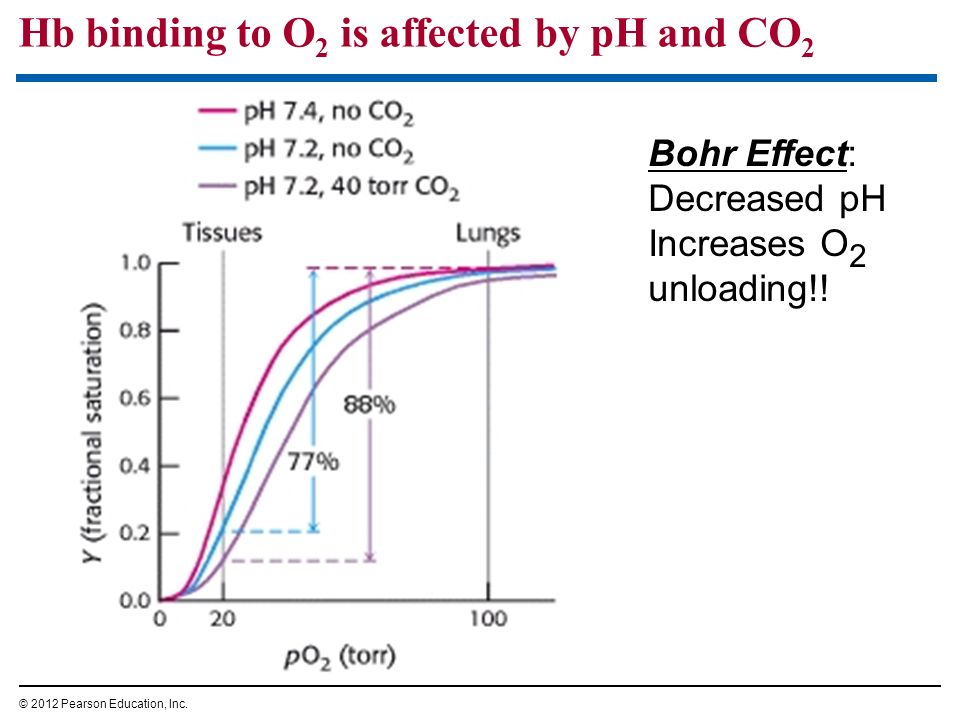 Hb binding to O2 is affected by pH and CO2