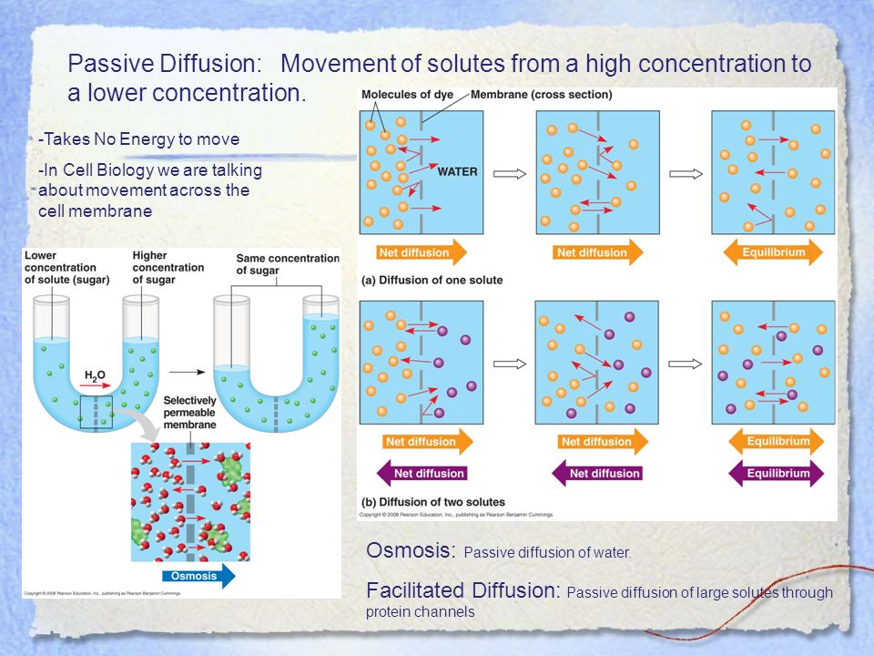 Passive Diffusion: Movement of solutes from a high concentration to a lower concentration.