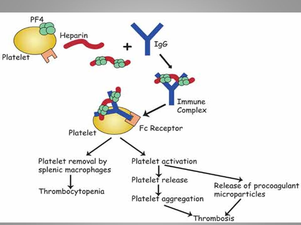 THROMBOCYTOPENIA: Heparin/PF4 complexes undergo aggregation and are removed prematurely from the circulation