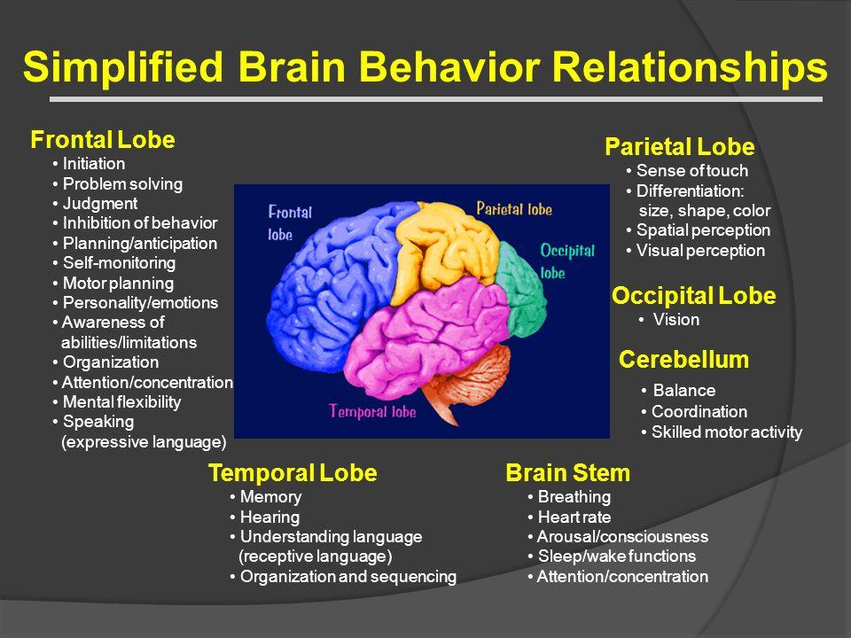 Simplified Brain Behavior Relationships