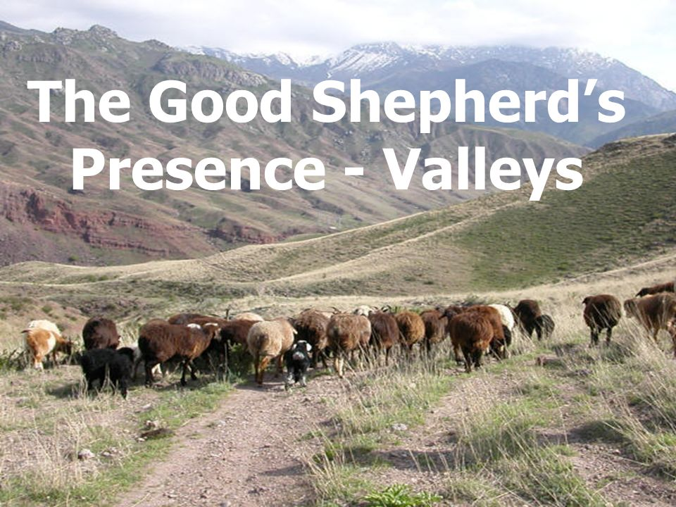 The Good Shepherd's Presence - Valleys