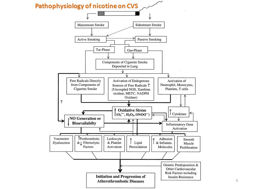 Pathophysiology of nicotine on CVS
