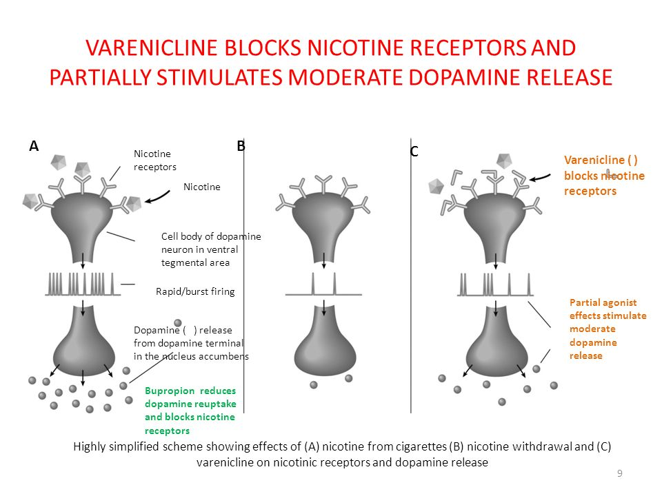 VARENICLINE BLOCKS NICOTINE RECEPTORS AND PARTIALLY STIMULATES MODERATE DOPAMINE RELEASE