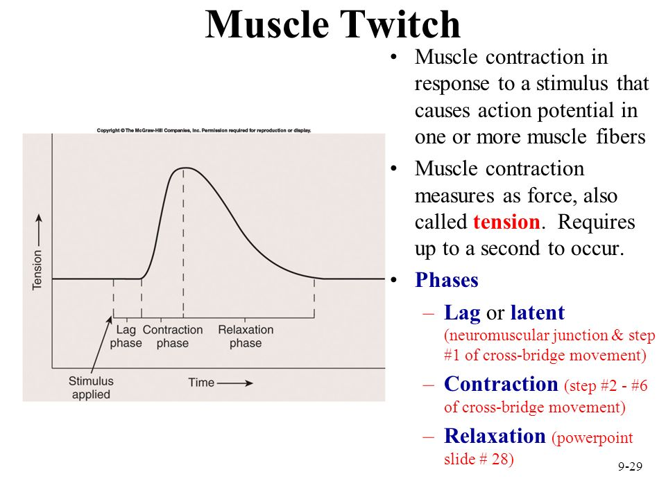 Muscle Twitch Muscle contraction in response to a stimulus that causes action potential in one or more muscle fibers.