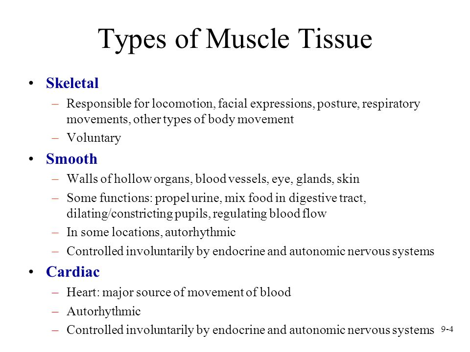 Types of Muscle Tissue Skeletal Smooth Cardiac