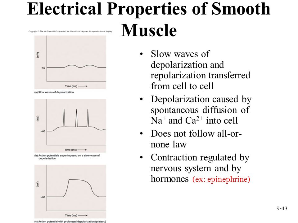 Electrical Properties of Smooth Muscle