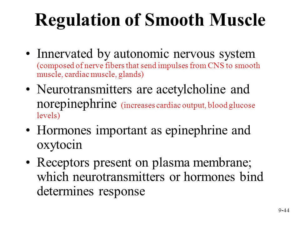 Regulation of Smooth Muscle