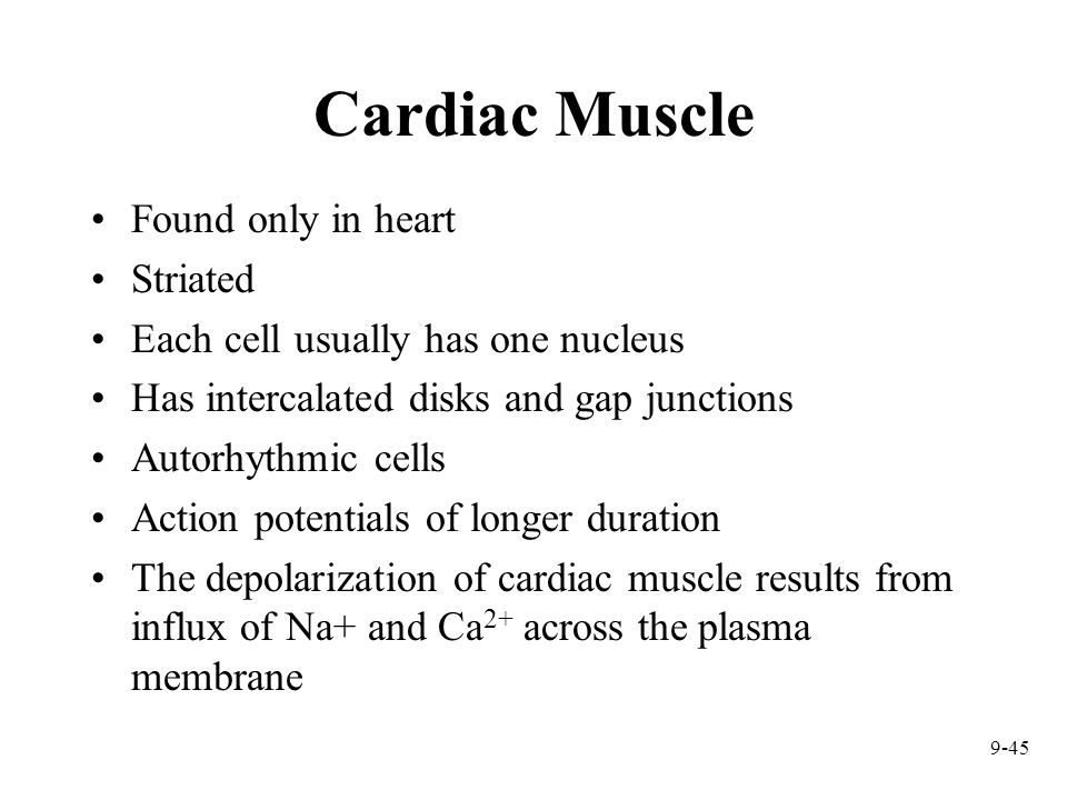 Cardiac Muscle Found only in heart Striated
