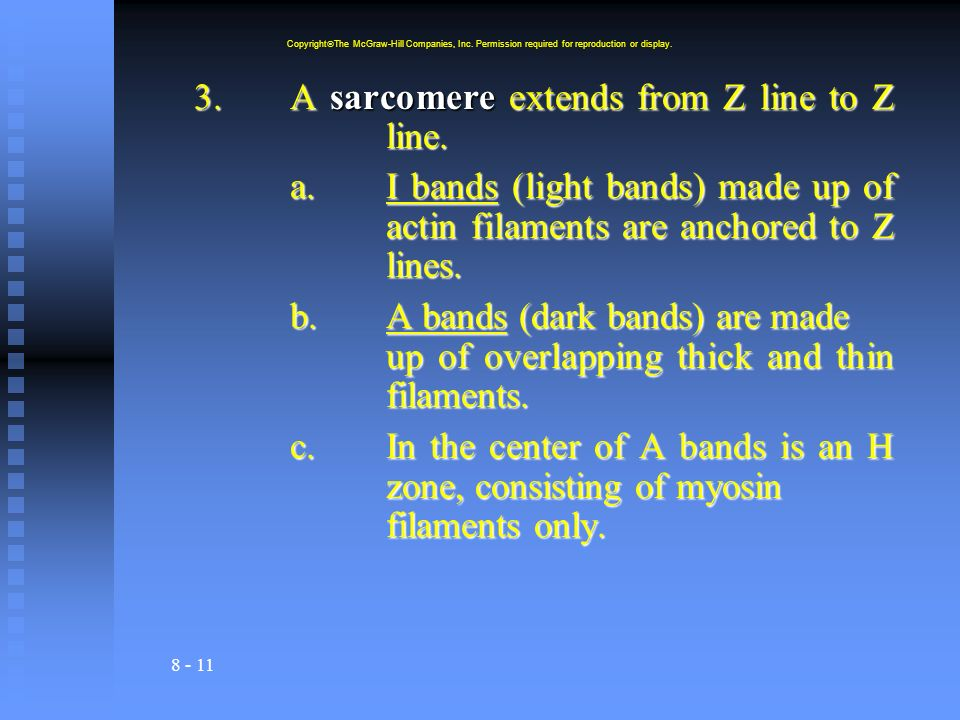 3. A sarcomere extends from Z line to Z line.