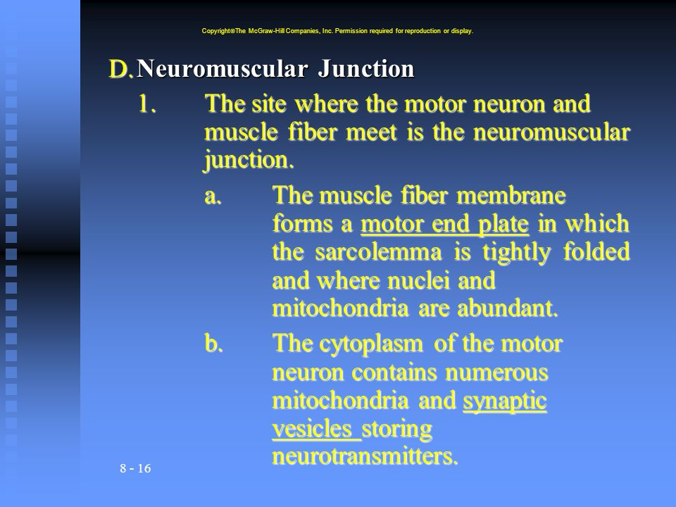 D. Neuromuscular Junction