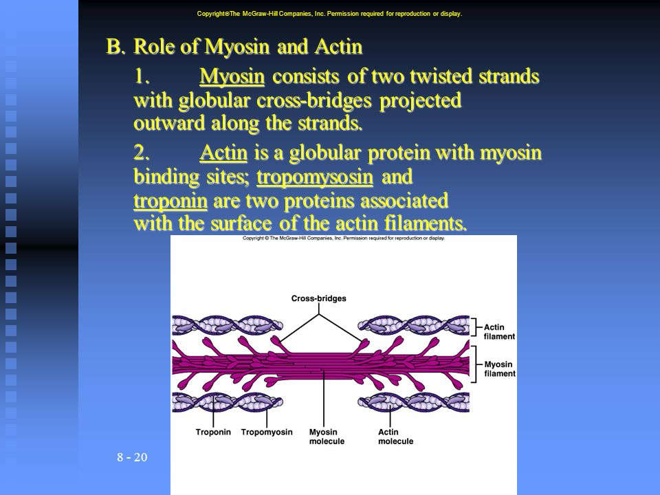 B. Role of Myosin and Actin