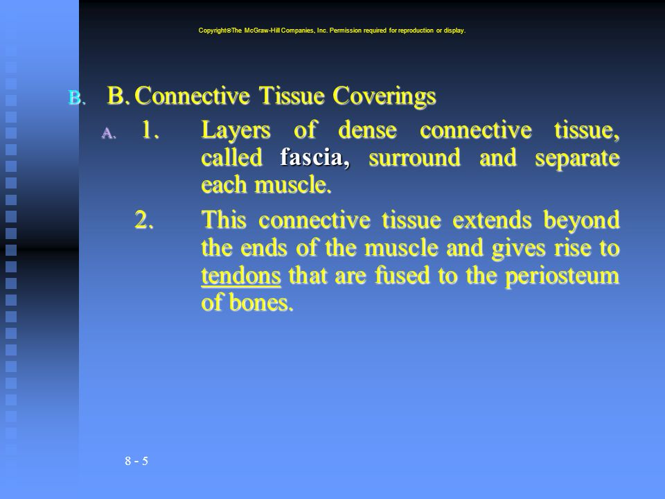 B. Connective Tissue Coverings